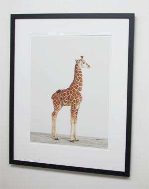 giraffe_specials